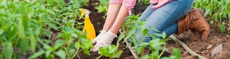 Отглеждане на селскостопански култури
